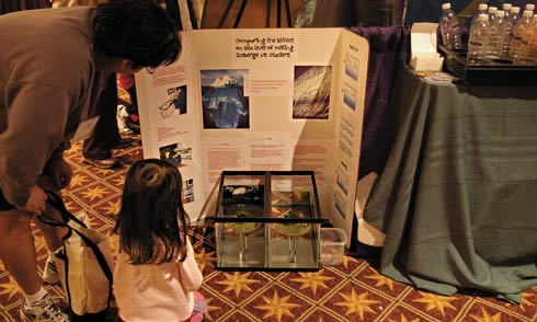 Global warming science fairs climate change science fair projects